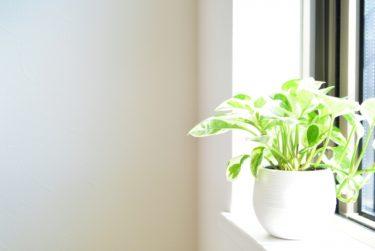 朝日に当たる植物 画像